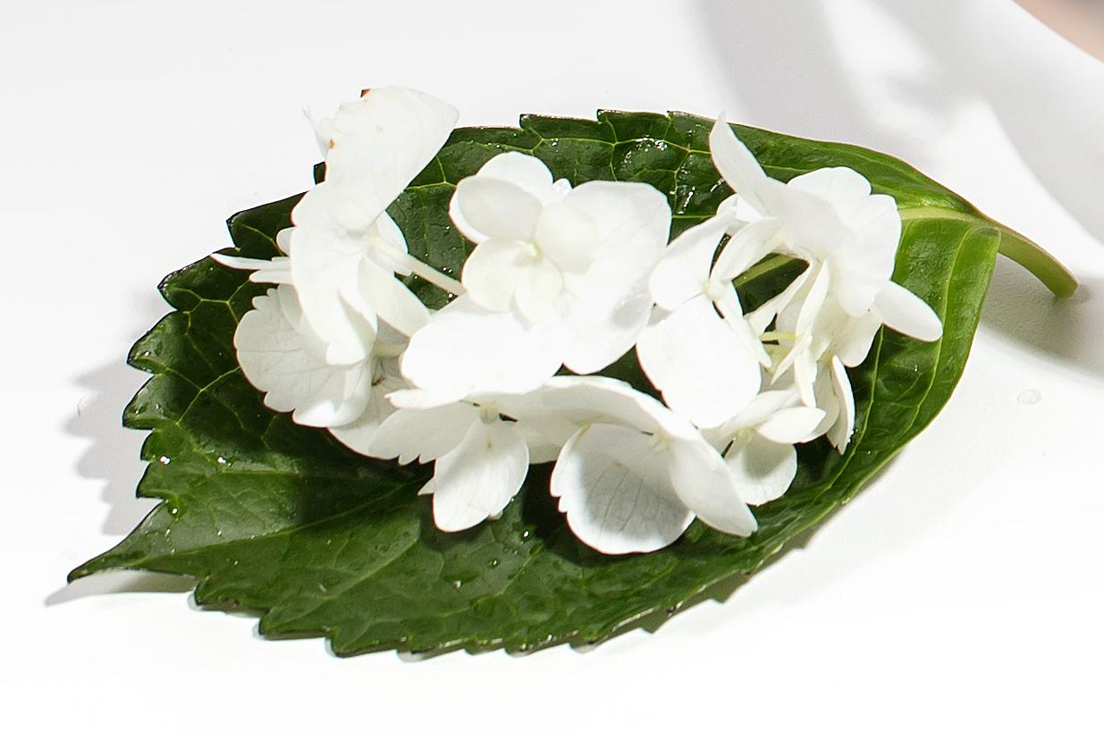 Qet-Botanicals-Skin-Studio-Plant-Based-Skincare-and-Wellness