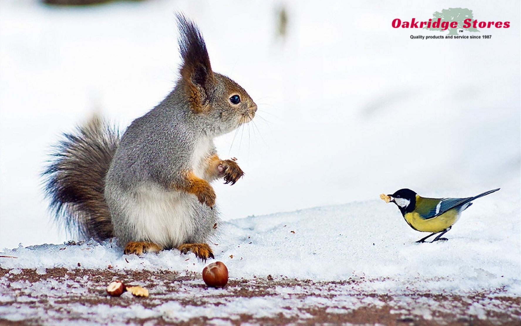 Make sure your Birds and Critters have plenty of Food and Water. Image